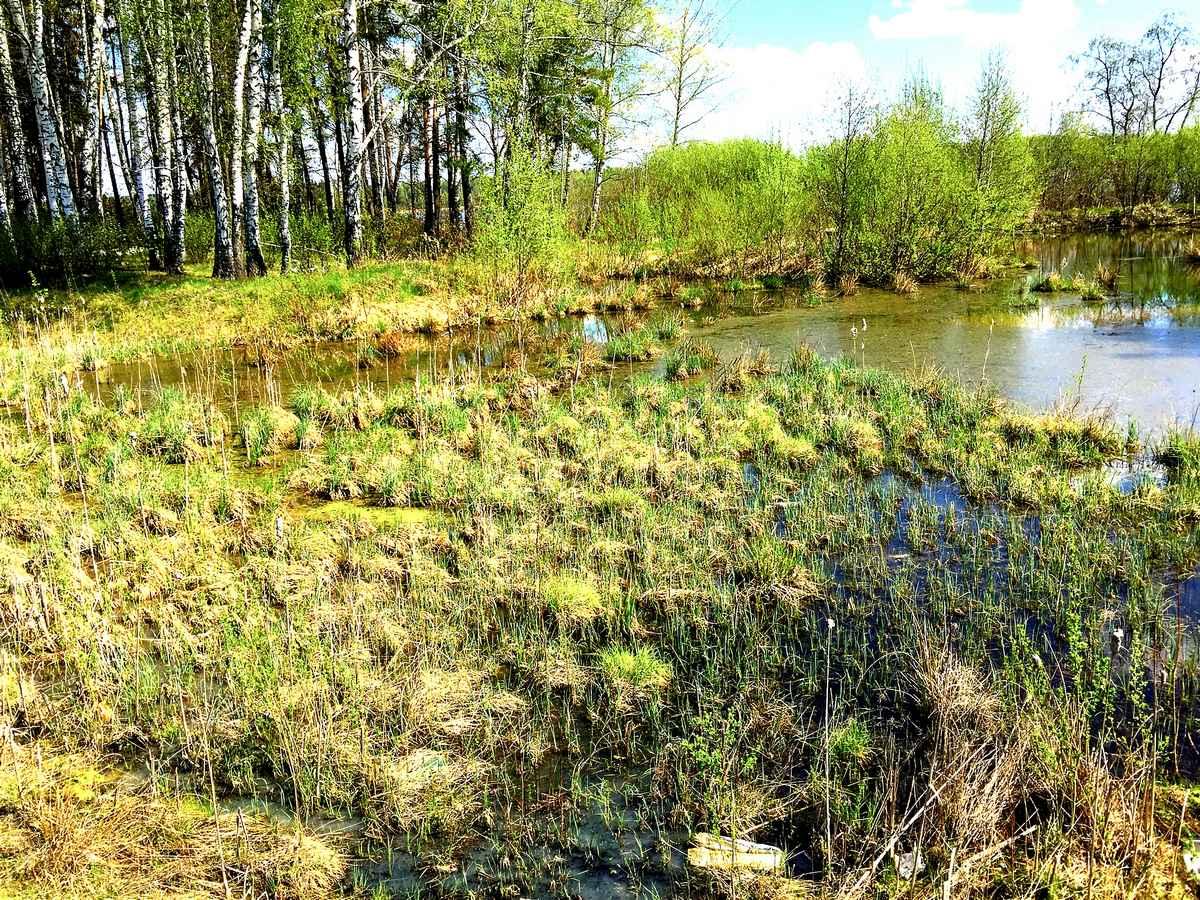 Очистка от водорослей водоемов и прудов