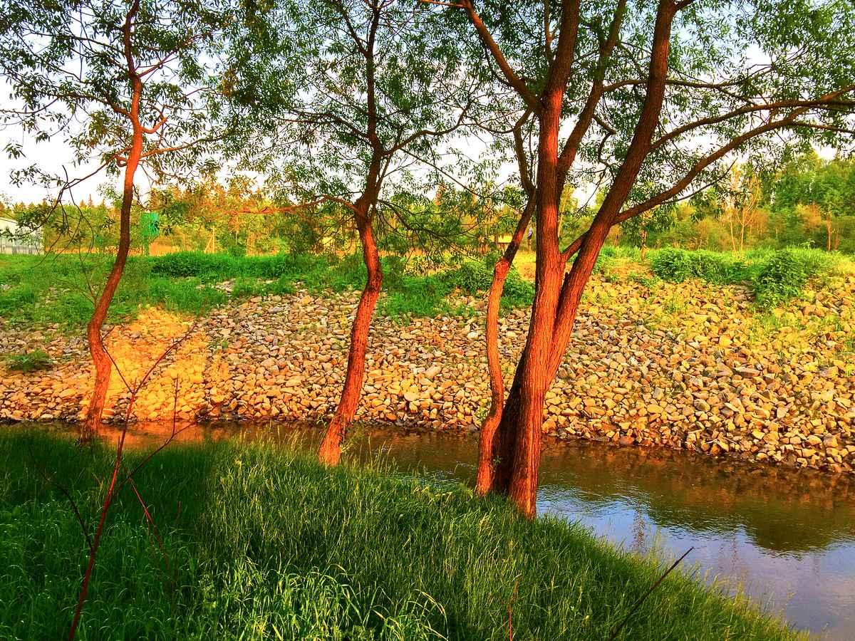 Разновидности берегоукрепления рек