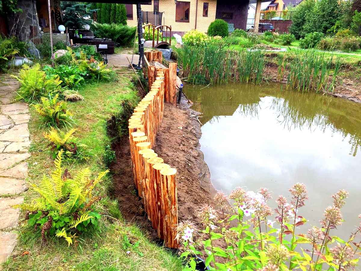 Подбор растений для дачного пруда