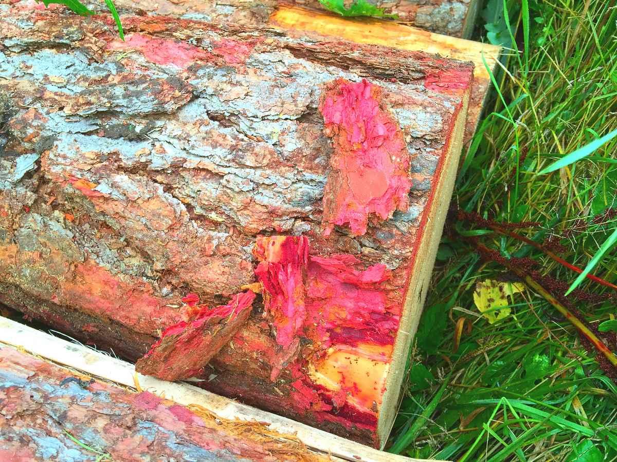 Как продлить жизнь лиственницы: дополнительная обработка древесины